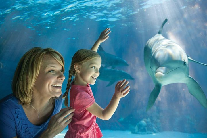 Top 8 Adventures to do with Kids at SeaWorld!