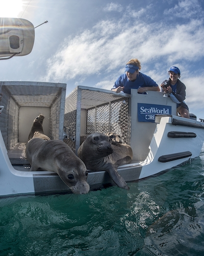 SeaWorld's Rescue Teams Give Injured & Abandoned Animals a Chance
